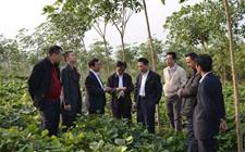 广东:踏出国门向海外开创农垦事业突破口