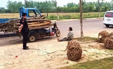 安徽滁州:路旁19棵绿化树树干被锯是为何?
