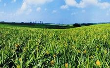 海南:六项改革加快打造热带特色高效农业王牌