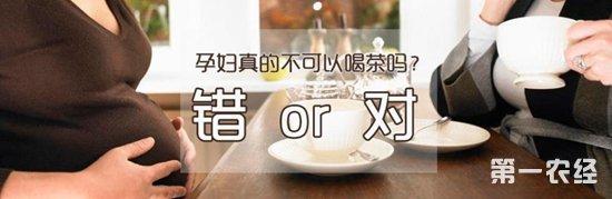 孕妇能喝铁观音吗?孕妇喝茶好不好?