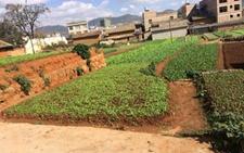 农村土地制度改革新尝试 农民土地经营权量化为股权