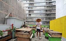 天津:打造优质安全特色养蜂产业
