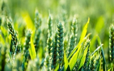 """农业部:实施""""互联网+""""现代农业 助推农业供给侧结构性改革"""