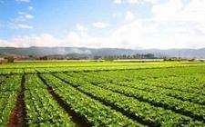 海南:着力深化农垦土地管理体制多重改革