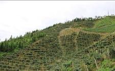 贵州遵义:发展绿色有机可持续农产品种植