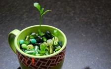 盆栽果树:这些水果吃剩的果核别扔!用花盆种