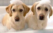 怎么给狗狗洗澡 给狗狗洗澡的基本知识