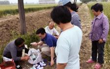 安徽怀远:全程社会化服务项目规范田间管理