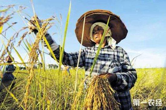 缅甸大米出口