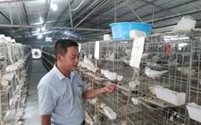 海南:托管养殖带动贫困户创收益