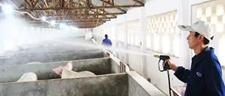 猪场怎么消毒?猪场常用的三种消毒方法