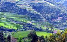 山西长治:依托优势 稳步推进农业供给侧结构性改革