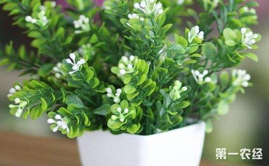 10种不怕晒的盆栽植物介绍!越晒长得越旺盛