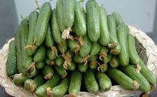 乳瓜多少钱一斤?