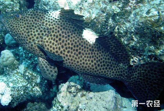 壁纸 动物 海底 海底世界 海洋馆 水族馆 鱼 鱼类 550_375