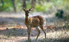 海南:严厉打击破坏野生动物的违法犯罪行为