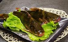 <b>黄颡鱼多少钱一斤?</b>