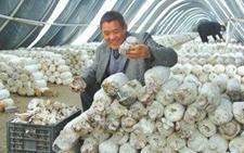 浙江衢江:食用菌栽培实现农业增效增收