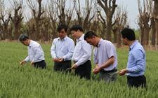 湖南湘西:充分利用特色农业资源 大力实施农业品牌战略