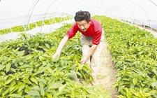 江苏滨江:培育新型职业农民 促进现代农业增产增效