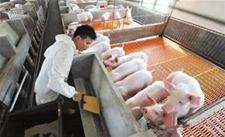 猪场常用消毒药品的种类有哪些?猪场常用消毒药品介绍