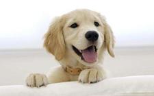 怎么给狗狗洗澡 给狗狗洗澡的基本常识