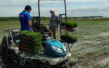大力推广水稻侧深施肥 让化肥使用减量增效
