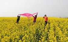 河南洛阳:充分利用当地资源优势 促进休闲农业快速发展