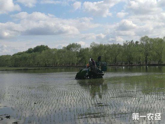 麻育秧膜水稻机插育秧技术