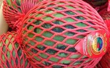 海南文昌:3.1万亩西瓜喜获丰收 提前种植避免市场囤积