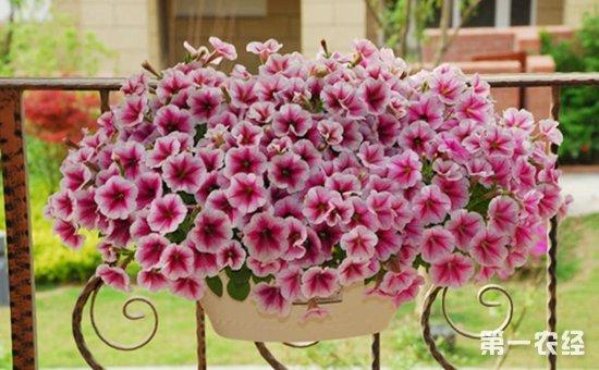 5种好看易养活的盆栽植物介绍!!非常容易就养爆盆了