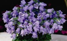 5种好看易养活的盆栽植物介绍!!非常容易就养