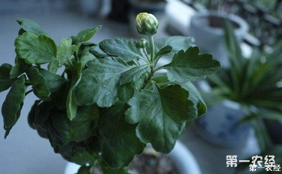 养花技巧:盆栽花卉不同生长时期的养护方法