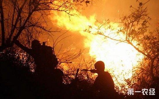 这是昨天下午5点,森警官兵乘坐直升机进入火场时拍摄下的画面。据拍摄视频的森警战士介绍,当时火线目测在5公里左右,现场烟雾很大。尽管树林茂密,视角很远,但是从树木的缝隙间依然可以看见明火燃烧。在大火蔓延烧过的地方,整片森林已经变成了漆黑一片。