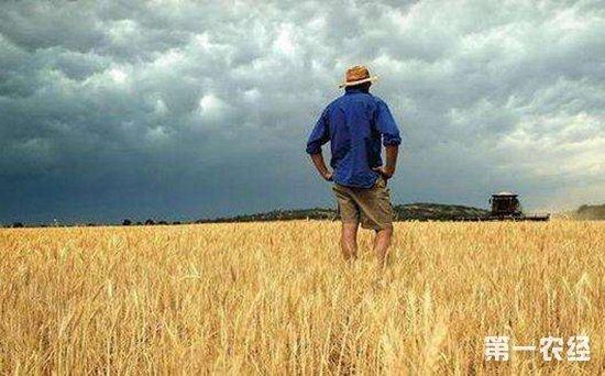 俄罗斯小麦丰收