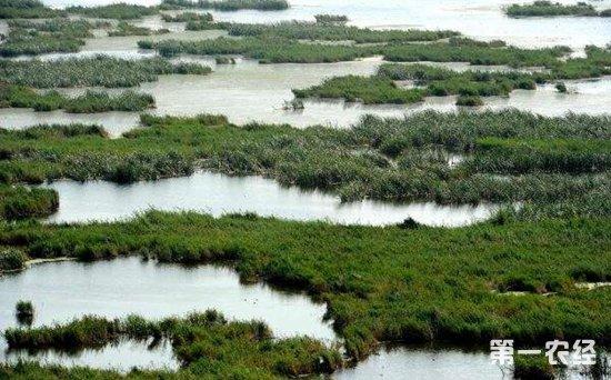 湿地保护修复