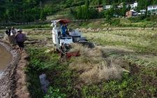 重庆梁平:全面油菜机械化生产技术新模式