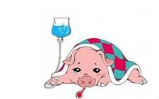夏季如何防治母猪胀气