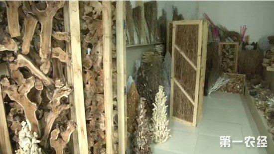 老茶树做成工艺品,湖北男子年赚385万美元