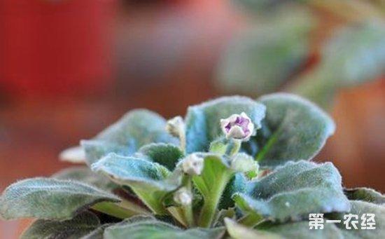 夏季来临天气渐热  这些盆栽植物再不扦插可就没机会了!
