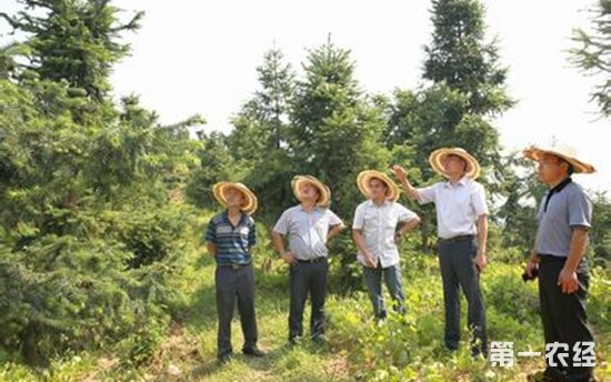 林产品质量安全监测