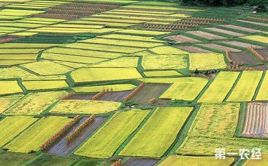 农业结构调整