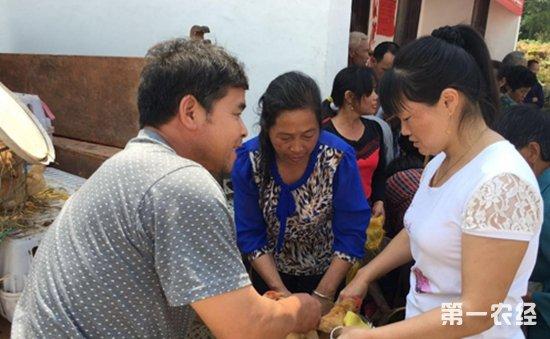 """江西上犹县:妇联下起扶贫""""及时雨""""鸡苗发放带给贫困户生活新希望"""