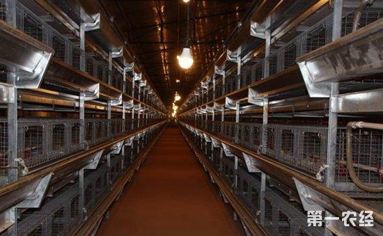 进行现代化养鸡场建设好不好?现代化养鸡场的两大优势分析