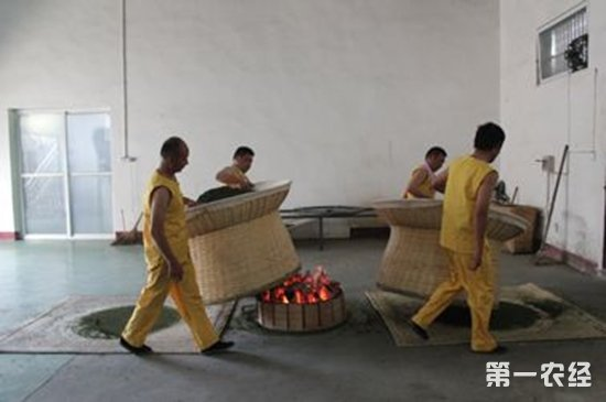 六安瓜片的采摘炒制工艺