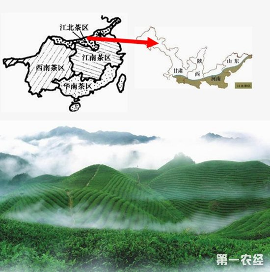"""中国四大茶区之""""江北茶区""""地图"""