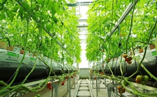 新疆南疆地区实现无土栽培农产品技术