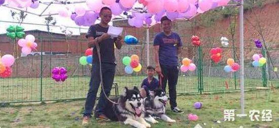 """民众为狗办婚礼:狗狗披婚纱有""""结婚证"""""""