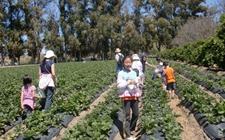 家庭农场申报标准是什么?如何申请家庭农场?