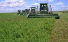 湖南桑植:发展绿色产业示范基地建设